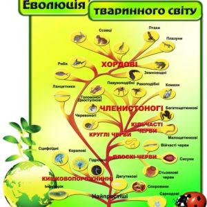 Еволюція тваринного світу