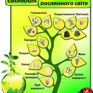 Еволюція рослинного світу