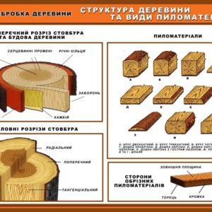 стенд структура деревини та види пиломатеріалів