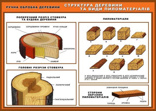 структура деревини та види пиломатеріалів